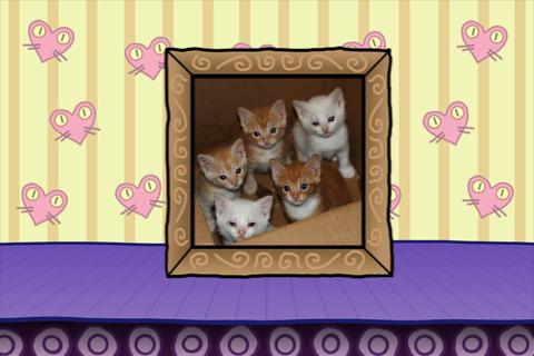 Kitten Conveyorbelt
